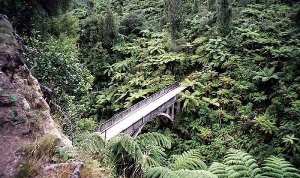 Maungaparua-Stream،-نیوزیلند